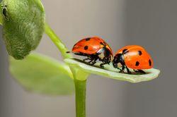 Exposition - Flash sur les insectes